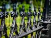 Fenceline (Kelly_MR) Tags: hollywoodcemetary fence fenceline fencelinefence