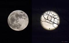 Sup'a Moon (Clayton Perry Photoworks) Tags: vancouver bc canada winter explorebc explorecanada richmond moon supermoon collage
