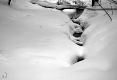 The brook (bd168) Tags: nature forest water blanc et noir neige snow hiver winter brook ruisseau forêt blackandwhite