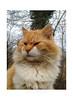 Galileo (Fiorenzo Delegà) Tags: cat gatto pelo fur felino felis apple iphone 4s appleiphone4s
