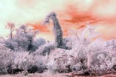 Infrared Cahuita National Park (192) (Beadmanhere) Tags: costa rica cahuita national park infrared