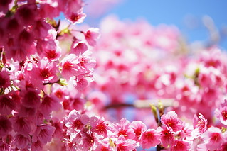 最喜歡的花季