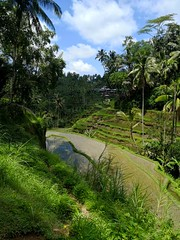 Stunning vistas in Ubud, Bali, Indonesia. (josephmanitoba) Tags: bali indonesia travel riceterrace travelphotography vista dogwood2018week4 officialdogwood dogwood52 dogwood2018