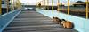 cat's island (Steve only) Tags: hasselblad xpan 445 454 45mm f4 rangefinder kodak gold 200 gb200 film epson gtx970 v750 cats snap japan rf