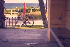 Empty Beach Bench (LarryJay99 ) Tags: 2018 lakeworth florida lakeworthbeach atlanticocean bench bike bikerack fence ocean happybenchmonday racks framing water bikes wheels bicycle seagrape bigwater harizon blue happyfencefriday