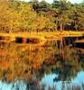 The Kalmthoutse Heide, gem of Flanders heath landscapes (jackfre 2) Tags: belgium flanders provinceofantwerp kalmthout kalmthoutseheide heide heat landscapes winter rareplantspecies animals
