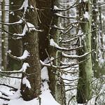 Harz-Oderbrueck_e-m10_1012074049 thumbnail