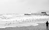 sea life (photoksenia) Tags: odessa storm sea street seagull water winter bw blackandwhite blacksea bird