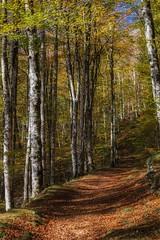Senderos (cruzjimnezgmez) Tags: irati navarra españa bosque selva ramas hojas sendero colores camino otoño paisaje naturaleza arboles