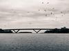 Crossing the birds (PhotoKaton) Tags: bridge sweden motala