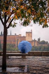 Día de lluvia (Antonio_Luis) Tags: lluvia mirador san nicolas nublado invierno otoño alhambra monumento patrimonio humanidad unesco torre torreon alcazaba granada andalucia nazari paraguas soledad banco arbol