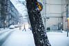 Silence (ewitsoe) Tags: snow poznan winter snowfall heavysnow cold ewitsoe poland wintery chill zima street cityscape urban pedestrian neighborhood jezyce canon eos6dii 50mm 12 lseries lens glass