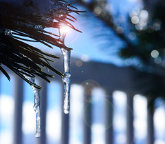 Ice is Nice (Karen McQuilkin) Tags: icicle sunburst fence pines