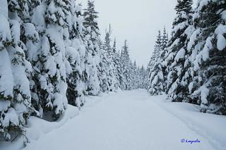 Camp Mercier - Réserve faunique des Laurentides - Wildlife Reserves ...5