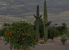 Hazy Shade of Winter (oybay©) Tags: arizona sunset winter sky cloud outdoor dusk serene field landscape bright skyline tree grass sun city west colorful color tonight monsoon weather clouds summer fall silhouette colros sunshower shower backyard nikon cactus