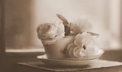 Flowers in sepia (Inka56) Tags: flowersinsepia crazytuesdaytheme 7dwf roses cup book window bokeh monochrome monochromebokeh sepia light vintage
