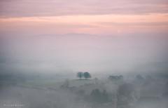 Daydreams (Sarah_Brooks) Tags: mist fog misty foggy tree trees landscape somerset winter jan cold