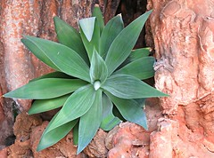 Cave Plant! ('cosmicgirl1960' NEW CANON CAMERA) Tags: ojen spain espana andalusia costadelsol rocks caves green leaves plants foliage holiday travel yabbadabbadoo