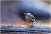 export_IMG_1029.jpg (Zi Ro) Tags: nationaalpark vogels hoge veluwe vogelhut schaarsbergen otterlo edelhert overige hogeveluwe