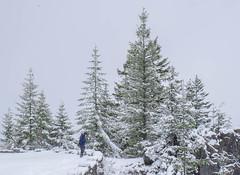 Ricksecker Point Road (rich trinter photos) Tags: mountrainier winter ashford washington unitedstates us rickseckerpointroad storm trintephotos landscape