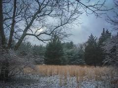 Winter Scene New Jersey (Noel Alvarez1) Tags: iphonese nj nature usa landscape land trees pine mobile photography