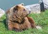 Brown bear (Maryna K.) Tags: animal bear brownbear animalplanet