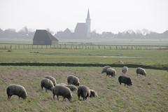 winter days at the North Sea: Texel (Christopher DunstanBurgh) Tags: texel northsea nordsee noordzee noordholland holland netherlands niederlande paysbas