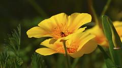 bonitas flores!! (vitofonte) Tags: flor flower flores flowers naturaleza nature natura natureza vitofonte ngc npc