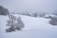 Winter is still here (Silva Predalič) Tags: slovenia malilipoglav tree snow sky landscape winter cloudy church village