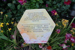 About Narcissus DSC09308 (benhosg) Tags: text gardensbythebay