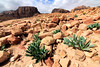 Beautiful and rugged Wadi Musa Landscape, Jordan (Aethelweard) Tags: maangovernorate jordan jo geology rocks mountains sky landscape countryside rural desert beautiful spectacular stunning