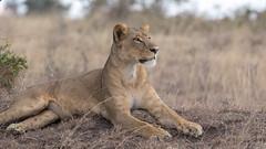 Nairobi-Nationalpark-9660 (ovg2012) Tags: kenia kenya nairobi nairobinationalpark