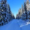 I norr underbart #vinterväder. #Kallt men otroligt vackert i #skogen, -22 i #Strömsund #Jämtland. #Snötyngda #granar och #fåglars kvitter, då njuter man 😀 Foto: Marianne Tengberg (svenskvagguide) Tags: vinterväder kallt skogen strömsund jämtland snötyngda granar fåglars