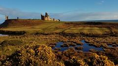 Dunstanburgh Castle (mandysp8) Tags: castle shore sea northumberland gorse sunshine ulex nationaltrust england uk