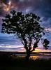 the tree (pamelaadam) Tags: 2013 scotland july summer tree ythan fotolog digital thebiggestgroup newburgh aberdeenshire