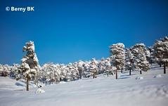 Bleu ciel en hiver   ♂️ ❅ (bernard78br) Tags: 5dsr canon ef40mmf12stm eos hiver iran lightroomcc logicielstraitementimage luminar météosaisons neigesnow pays photographie photographiematerieletlogiciels saisons tehran téhéran winter