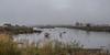 IMG_3542 Clive swans fog (roseyposey2009) Tags: clive swans fog canon m5 efm 55200 clivefog