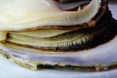 DSC00054 (muzina_shanghai) Tags: 牡蠣 蒸し牡蠣 oyster