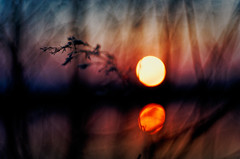 #173 - Sunset by the water #3 / Západ u vody (photo.by.DK) Tags: sunse sunsetbythewater water waterreflection bytheforest mood moodysunset sunset bokeh bokehlicious beyondbokeh wideopen shotwideopen manuallens manualfocus manual manualondigital pancolarauto5018mc pancolar50 pancolarauto pancolarauto50 pancolar czj czjpancolar carlzeiss carlzeissjena carlzeissjenapancolar zeiss artbydk photobydk sonya7 sonyilce sony sonyalpha mirrorless