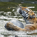 Swimming with the ball thumbnail