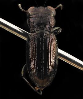 Beetle, U, back, Carroll Co., Maryland_2014-01-17-17.42
