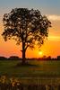 Field of Dream (tonesofcolor) Tags: wisconsin summer tree trees sunrises sunrise sunset sunsets sky field flowers grass clouds weather sun horizon canon dslr rebelt5 dreamy glow orange peace serenity joy calmness freedom love evening morning twilight dusk dawn art fineart portrait