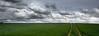 Cloud Drive (Beppe Rijs) Tags: deutschland germany schleswigholstein schlei wolken wolkendecke landschaft landscape natur nature field feld gras baum tree horizont horizon grün green clouds farbig colored line rural ländlich pastell fertile fruchtbar freshly color farbe acker track