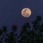Full moon rising thumbnail