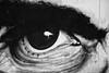 L'Italia nell'occhio critico di Pasolini # 2 (photograph61) Tags: murales pasolini italia