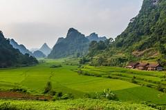 Cestou k jezeru Thang Hen (zcesty) Tags: vietnam20 skála pole krajina hory vietnam dosvěta caobằng vn