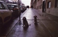 Cute couple waiting (ture360) Tags: olympusμ fujicolorsuperiaxtra400 helsinki analog filmcamera pohjoinenhesperiankatu epsonv200 selfscanned