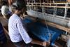 DSC_7481 (Kent MacElwee) Tags: woman weaving myanmar burma sea southeastasia asia lake freshwaterlake inlelake shop silkshop craft traditional atmyatpwintchel inpawkhonvillage lotus shanstate nyaungshwe