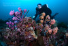 Lena posing behind sea tulips (Nicolas & Léna REMY) Tags: basspoint thegutter nauticam ocean wildlife rebreather revo australia shellharbour marinelife sponge nsw underwater inon pacificocean diving mer photography plongée recycleur scuba sea wild éponge