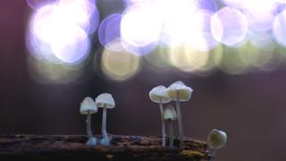 Mushrooms watching the lights